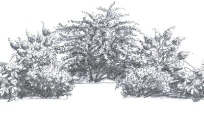 Alternativ 3: Blommande buskar