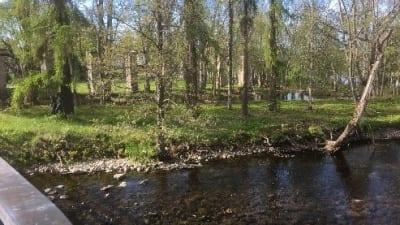 park med träd och vattendrag
