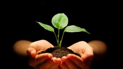 En planta med jord som hålls i ett par händer