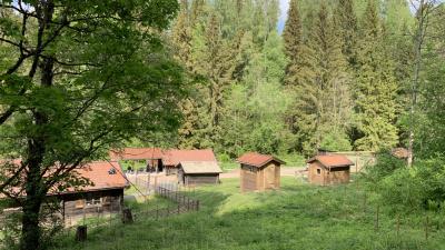 Fäboden i Säterdalen 2019