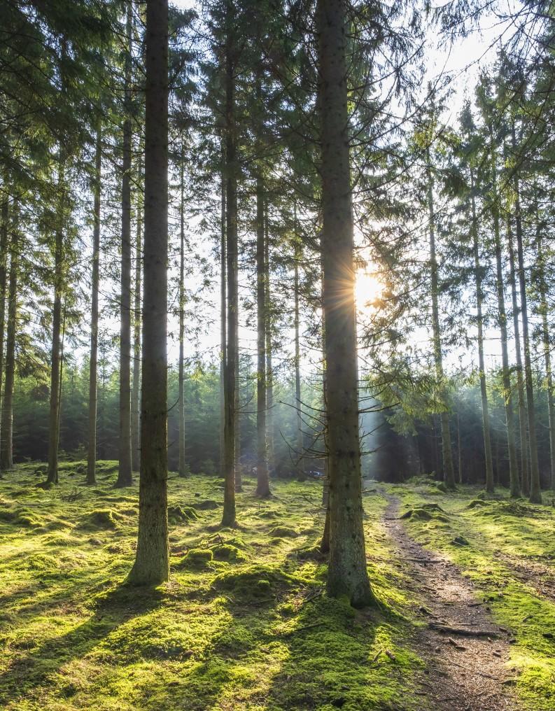 Stig i skogen med solstrålar bakom träden